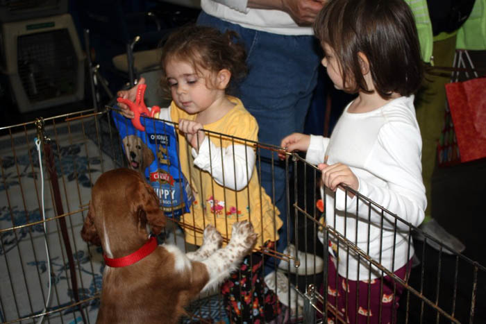 WSSCA Supported - AKC Meet The Breeds, Jacob Javits Convention Center, New York City, Sept 2013.